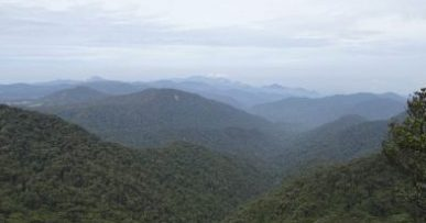 Guía de Cameron Highlands, Malasia