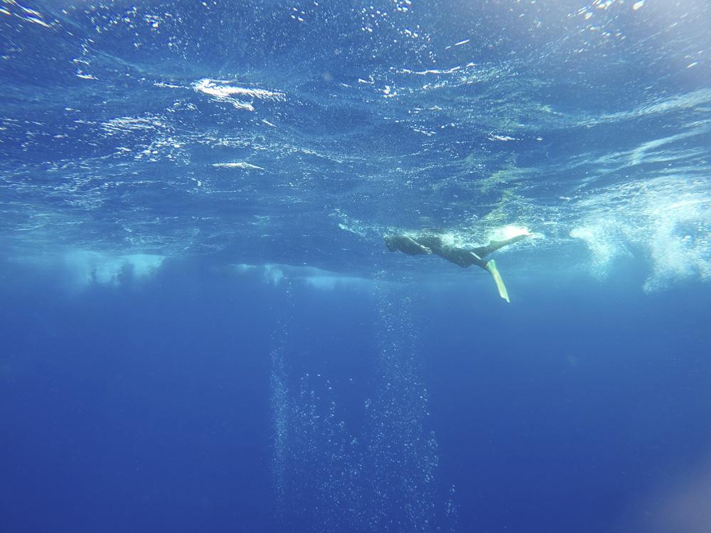 Nadar con ballenas en libertad, Tonga