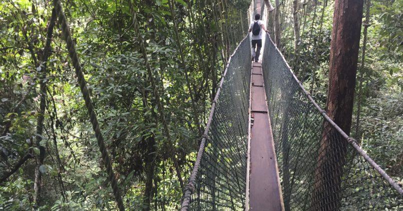 Taman Negara, Malasia
