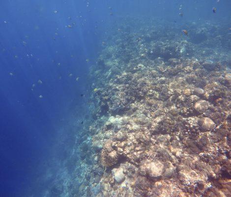 Banco de sardinas en Moalboal, Filipinas