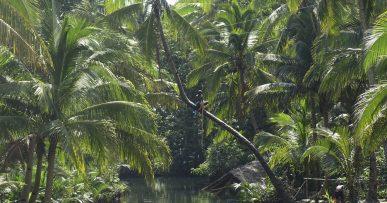 Río en Siargao, Filipinas