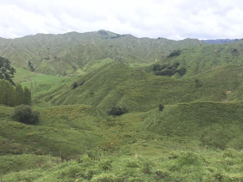 Caminos en Nueva Zelanda