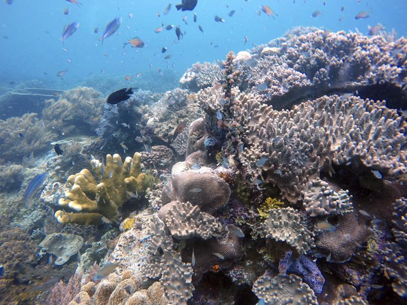 Coral en Raja Ampat