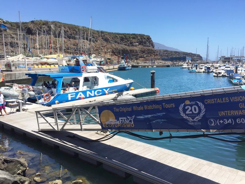 Avistamiento de delfines en Canarias